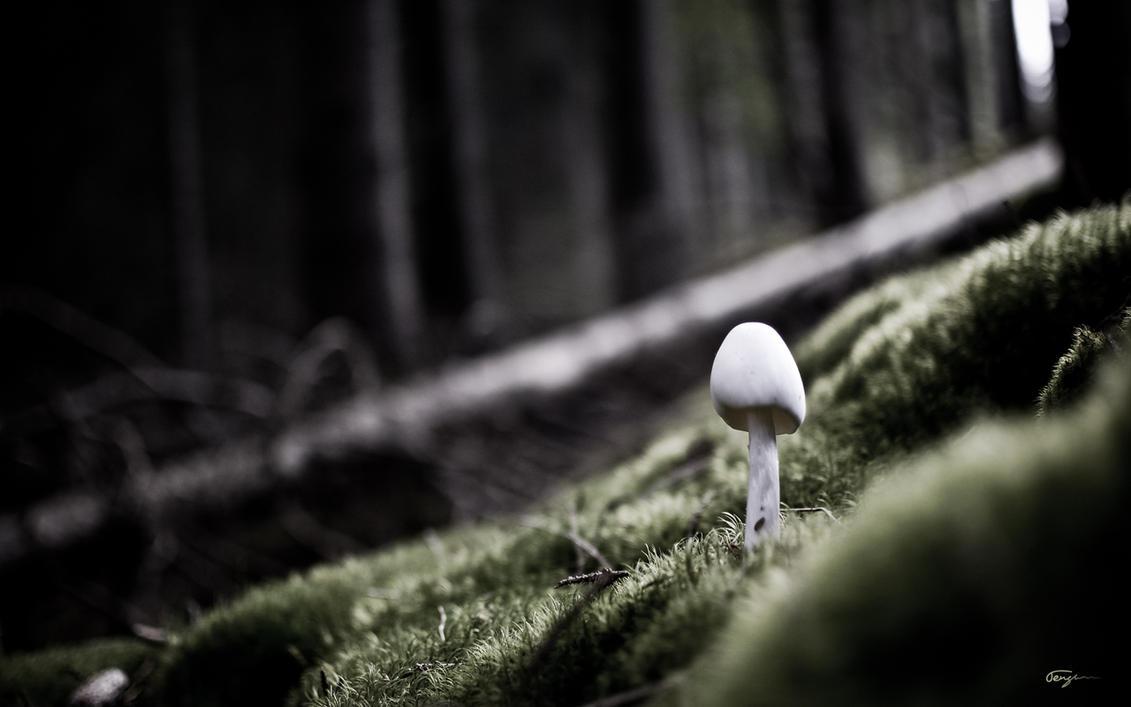 Gloomy Mushroom WP by Tengman