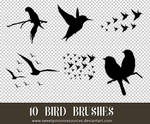Bird Brushes - Photoshop
