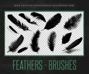 Feather Brushes | Photoshop