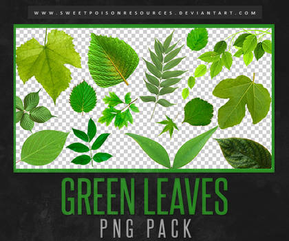 Leaves | PNG