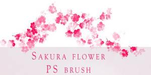 Sakura Flower by BrookeGillette