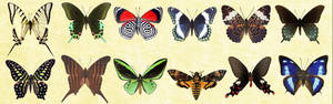 Mac Icons - Butterflies Set 1