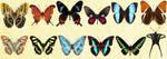 Mac Icons - Butterflies Set 2 by Nastino47