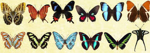 Windows Icons - Butterflies Set 2
