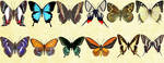 Windows Icons - Butterflies Set 3 by Nastino47