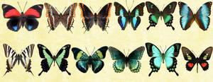 Windows Icons - Butterflies Set 5