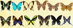 Windows  Icons Butterflies - Set 6