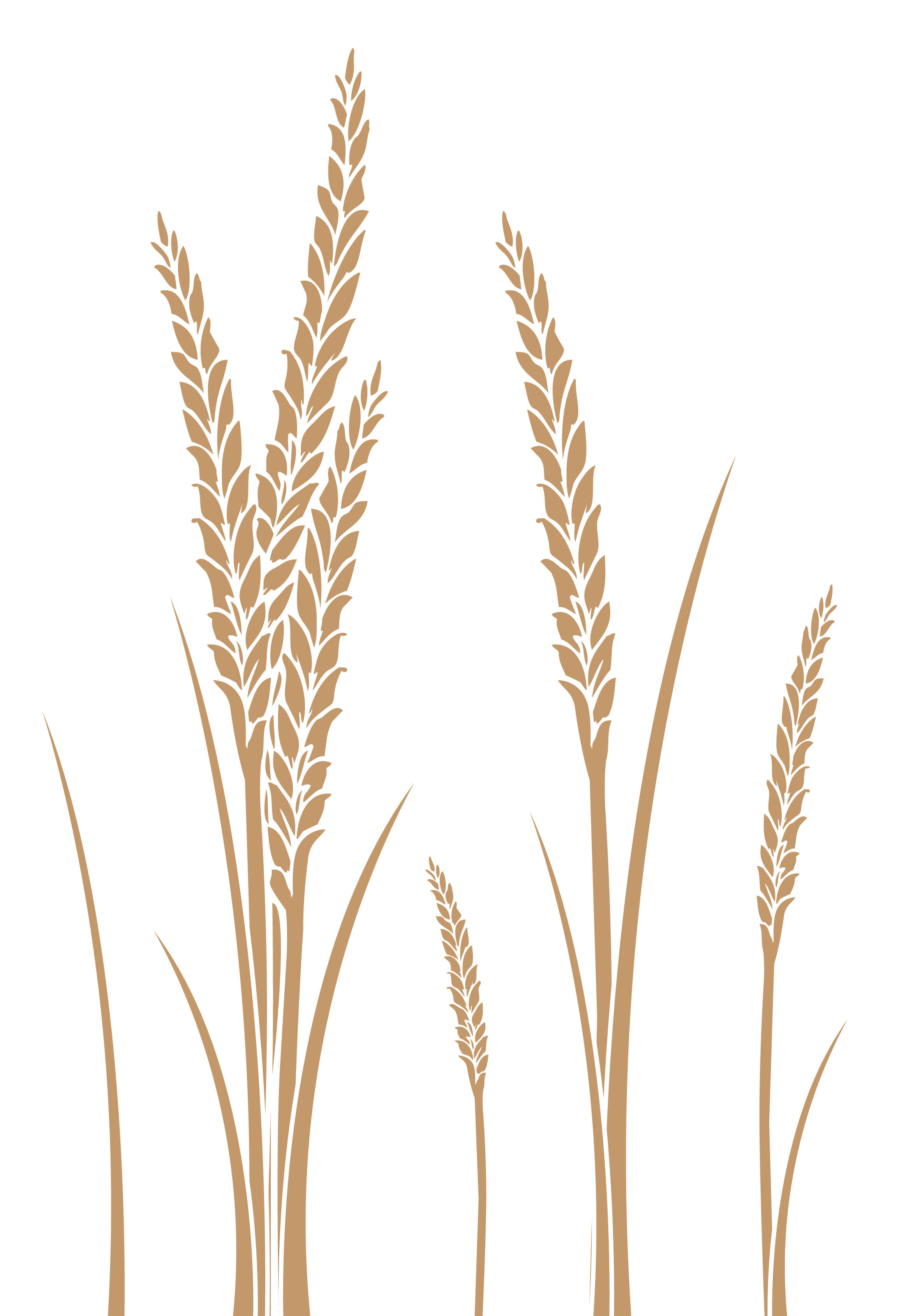 Wheat Vector by StooStockWheat Drawing