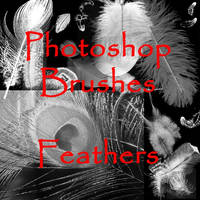 Photoshop FEATHER Brushes by vaia