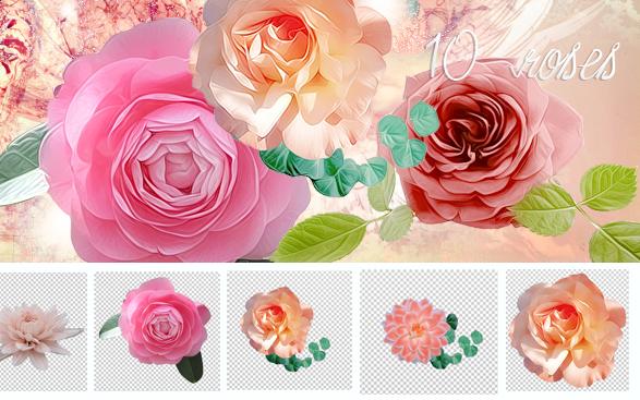 Stocks - Roses by So-ghislaine