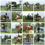 Showjumping and Cross Country Stock