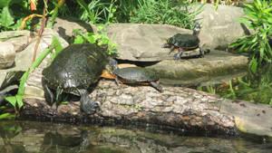 Turtles #4