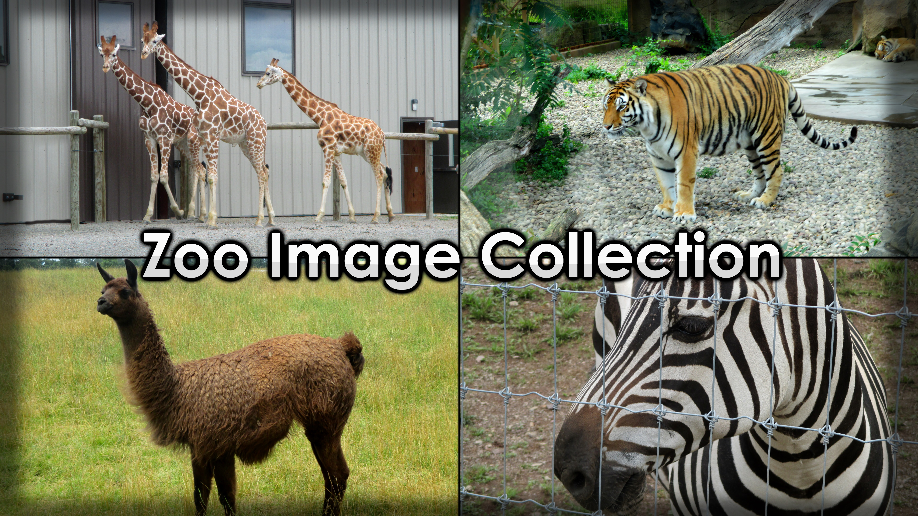 Zoo Image Collection
