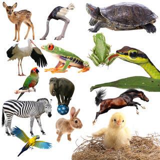 Animals_1 by sarthony