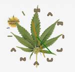 MarijuanaClock