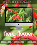 Fiery Flower Wallpaper