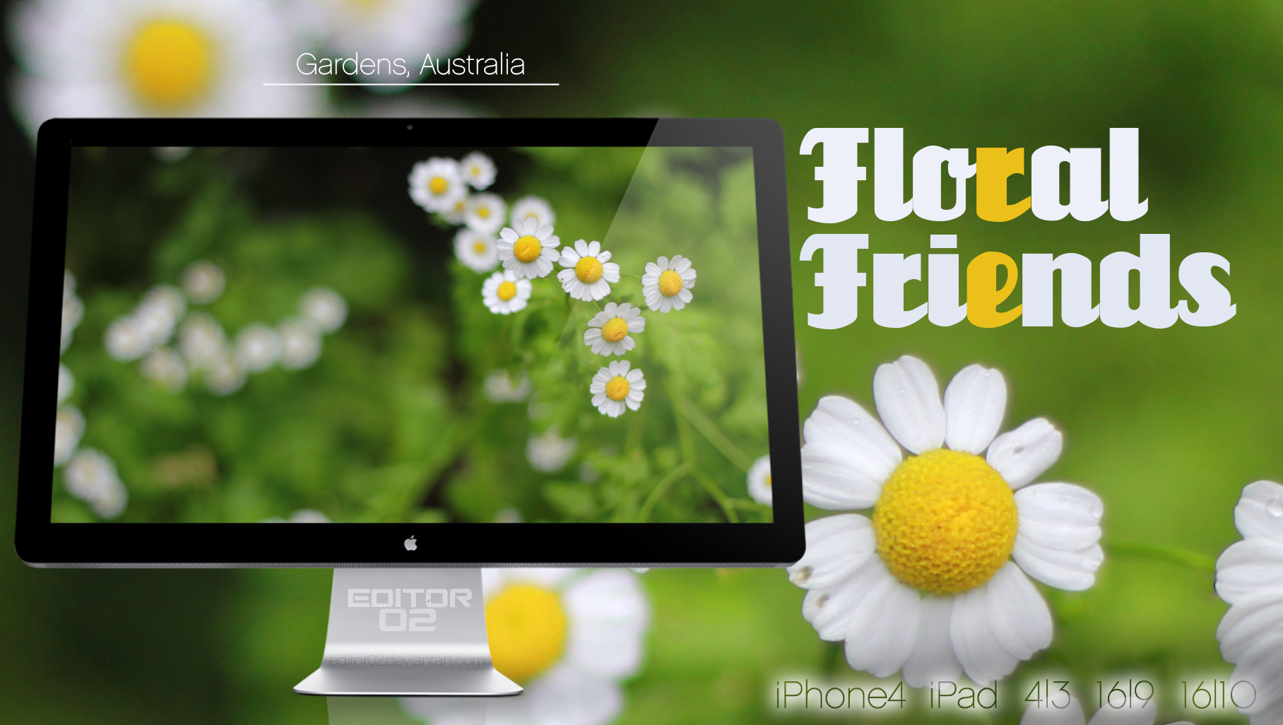 Floral Friends - Wallpaper
