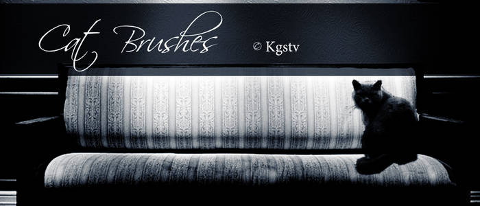 Kgstv-catbrushes