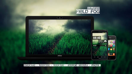 Field Fog Wallpaper
