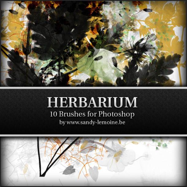 Floral Brushes by Kezako