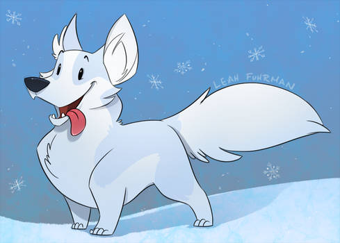 Arctic Corgi - Animated!