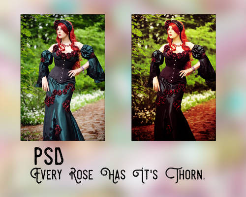 PSD | Every Rose Has It's Thorn.