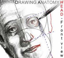 Anatomy: Head frontview by pandracchio