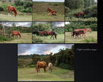 Mares and Foals New Forest NP