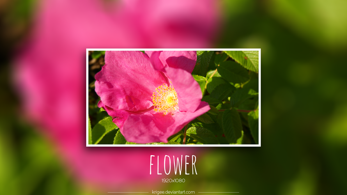 Flower by Krigee