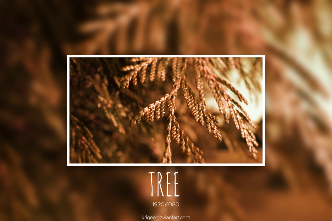Tree by Krigee