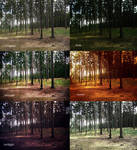 Forest Actions