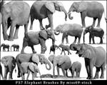 Elephant Brushes