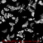 Scatterflies