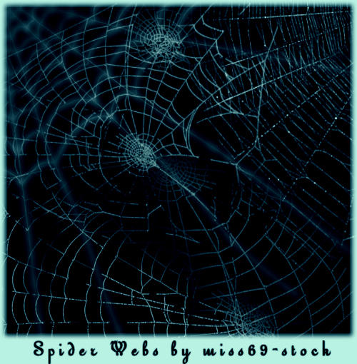 Spider Web Brushes by miss69-stock
