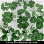 Clover brushes