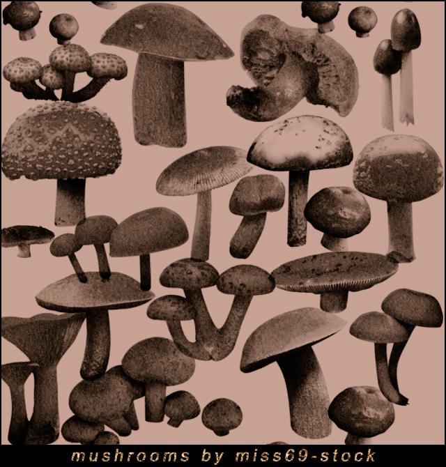 Mushroom Brushes