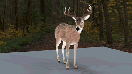 White-tailed deer idle animation_wip