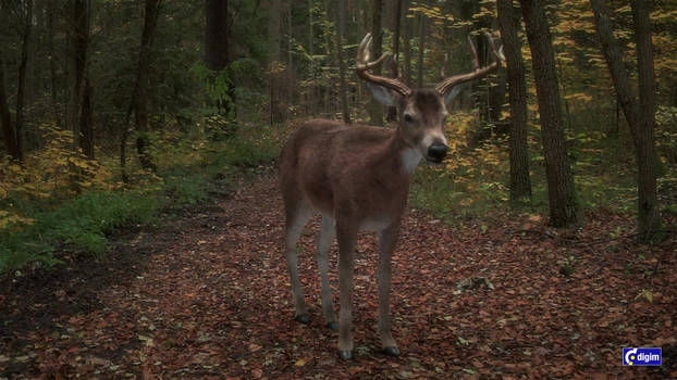 White-tailed deer idle animation