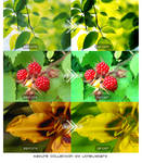 Nature Collection Actions