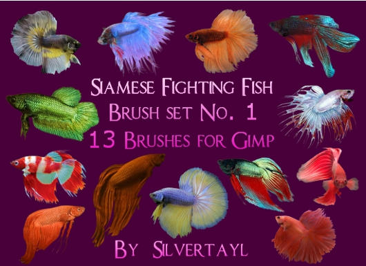 Siamese Fighting Fish Set 1 by Silvertayl