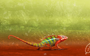 Chameleon by inphi