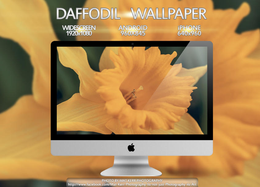 Daffodil Wallpaper Multi Pack
