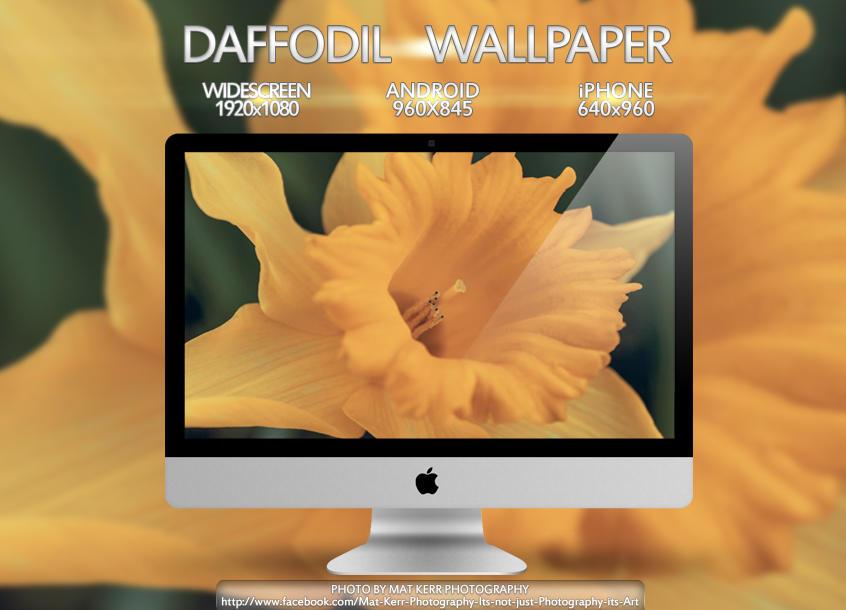 Daffodil Wallpaper Multi Pack