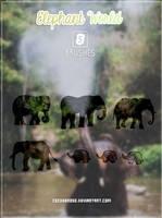 Elephant World | Brushes by CeciiDeRose