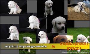 2014.08.25   Puppy Nougat evolution (4 to 12 weeks