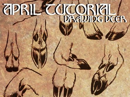 free drawing deer tutorial by herboreal on deviantart