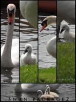 Swan Package 2 by ArrsistableStock