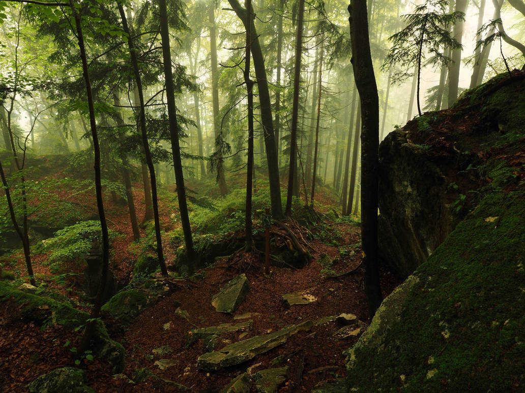 Misty Forest Stock Package by Burtn