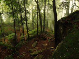 Misty Forest Stock Package