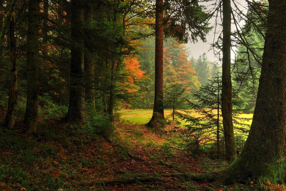 Autumn Forest Backgrounds by Burtn